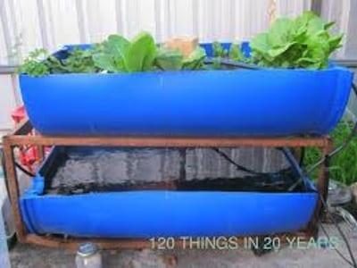 Les bassins poissons et bacs de culture pour l 39 aquaponie for Nourriture poisson rouge aquaponie