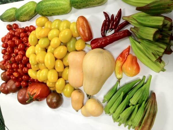 une variete de legumes en aquaponie tous au bon goût