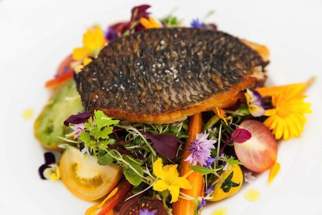 Gastronomie : Filet de Tilapia grille sur lit de salades et mini legumes aquaponiques
