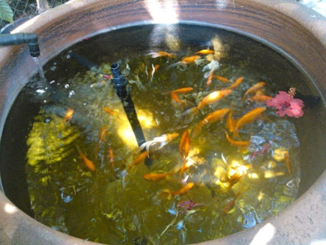 Tout simplement commencer l 39 aquaponie for Bac exterieur poisson