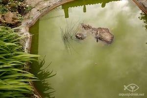 Le bassin à poissons existant