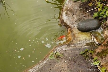 oxygénation de l'eau au retour vers le bassin à poissons