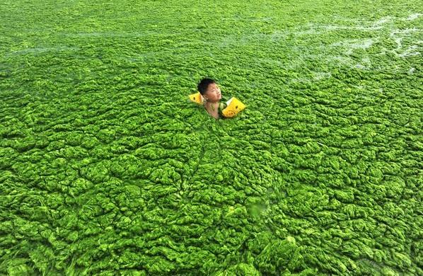 pic d'algues ou eutrophisation extrême en chine