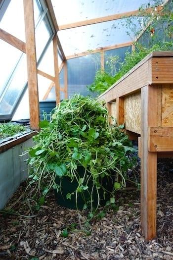 cresson-compost