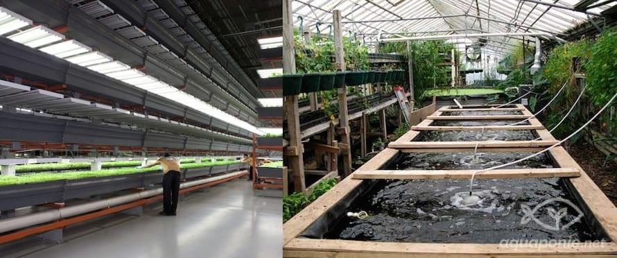 Ethique : l'aquaponie forcément durable ?