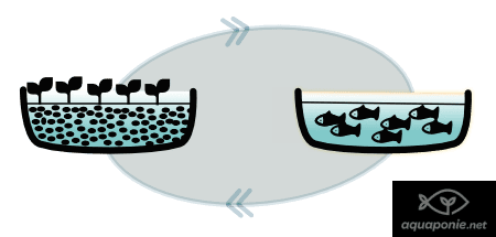 Maintenir l'équilibre d'un système d'aquaponie