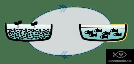 Système d'aquaponie manquant de plantes