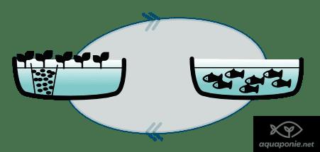 Système d'aquaponie manquant de substrat