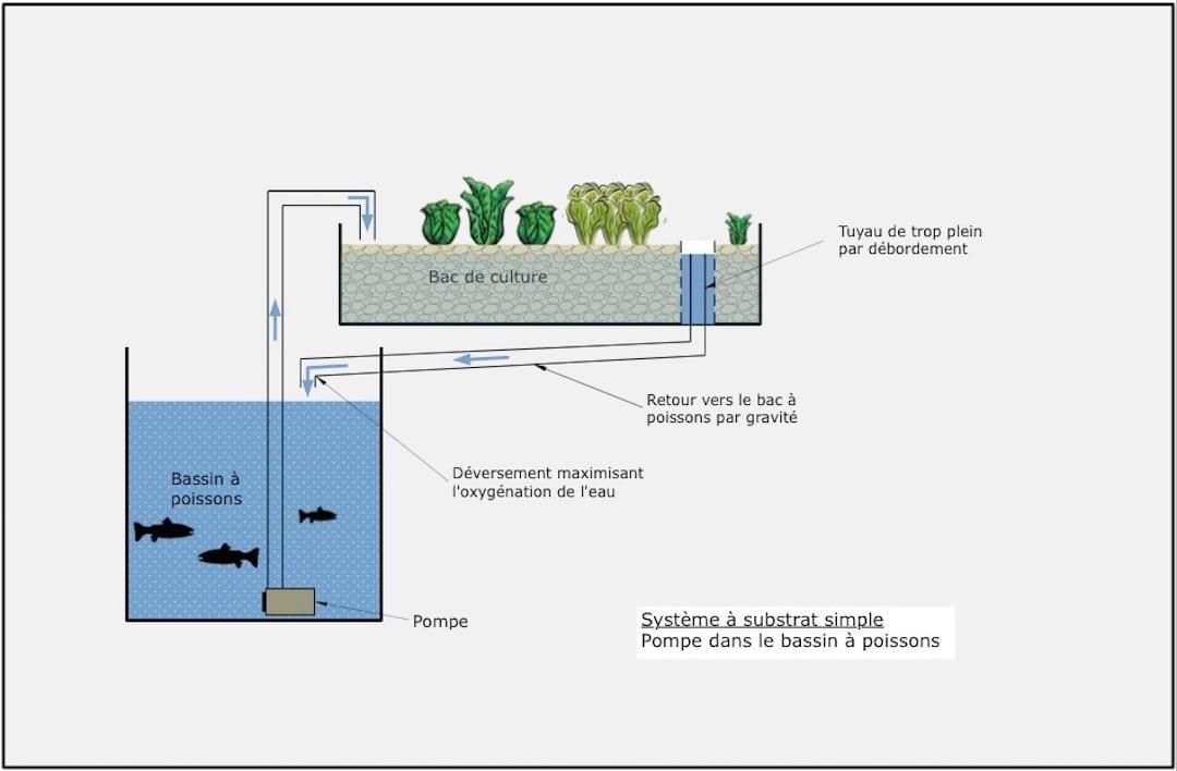 systeme simple d'aquaponie