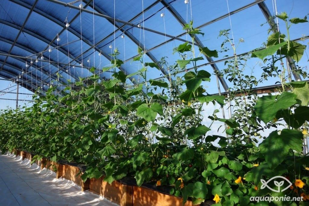 serre-aquaponie-agriculture-urbaine