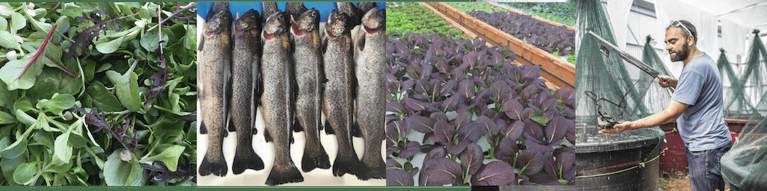 Formation à l'aquaponie pour les porteurs de projets de micro-ferme professionnelles