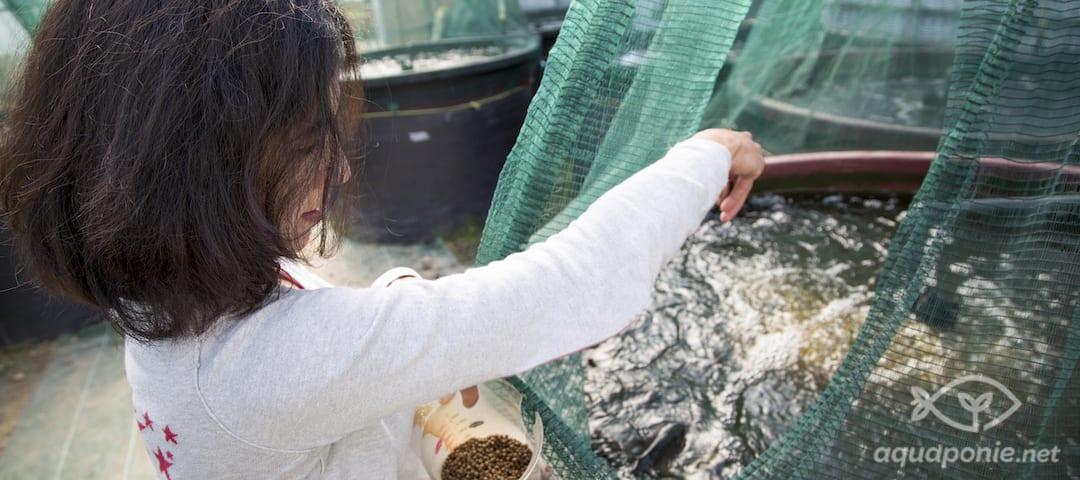 formation aquaponie nourrissage poisson