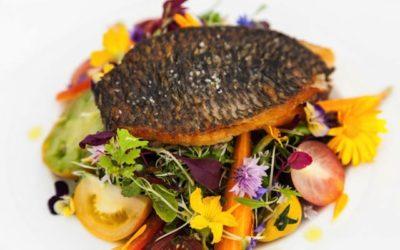 Gastronomie et aquaponie : un bel exemple