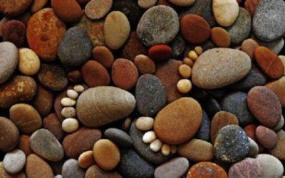 Choisir quel substrat utiliser en aquaponie ?